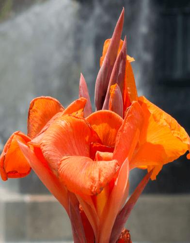 Orange flower - street